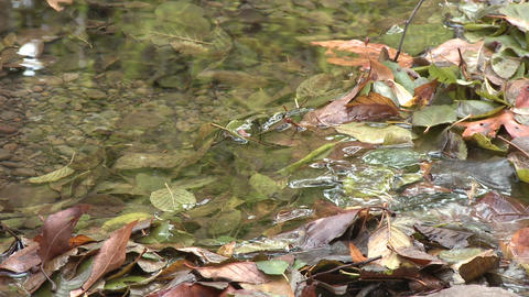 Close up of water flowing through leaves in Wheeler... Stock Video Footage