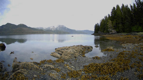 Fast time lapse of the tide retreating on Pond Island next to Kelp Bay off of Baranof Island in Sout Footage