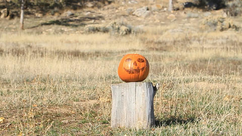 Pumpkin Explodes P HD 8061 Footage
