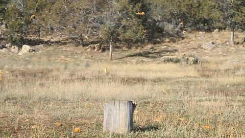 Pumpkin on stump shoot P HD 8062 Live Action