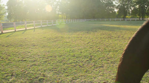 Beautiful brown horse eating lush grass on the farm pasture, animal breeding Live Action