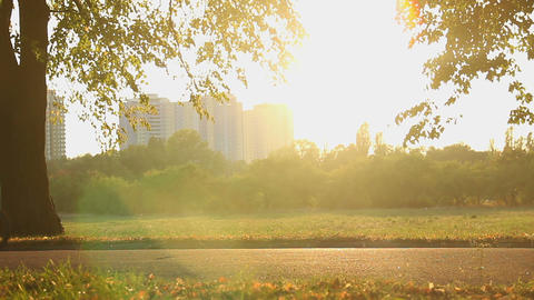 Beautiful magic hour in the park on city outskirts, many active people cycling Footage