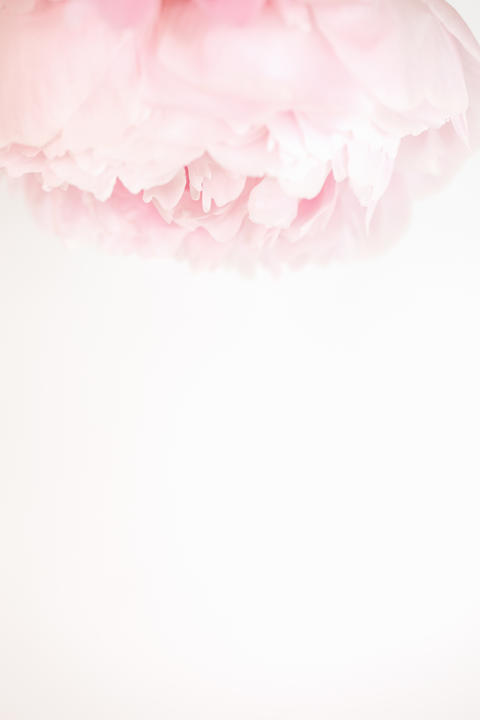 Soft white and pink peonies top frame on white background with space for copy Photo