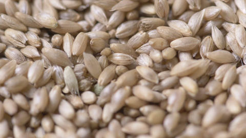 Close-up of golden seeds falling Footage