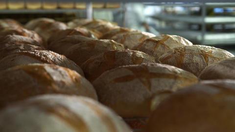Production of bakery products close up. Freshly baked ruddy bread close up Live Action