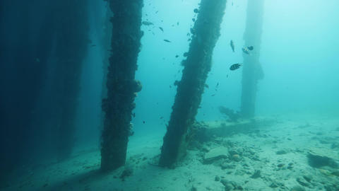 Corals and fishes inhabiting in the pier underside. Artificial reef Live Action