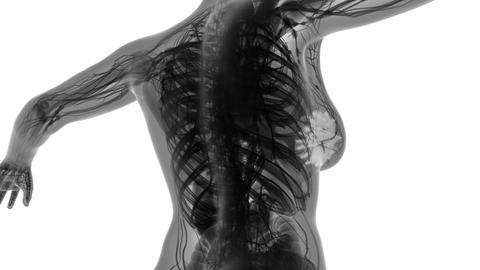 loop science anatomy scan of woman mammaria glands glowing Animation