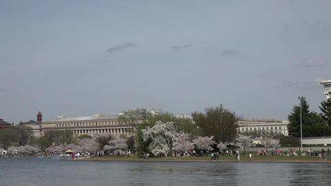 Washington DC Jefferson Memorial to Washington cherry blossoms pan 4K 044 Footage