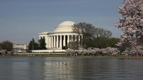 Washington DC Jefferson Monument cherry blossom festival 4K 068 Footage
