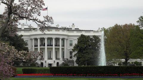 Washington DC White House garden lawn fountain 4K Live Action