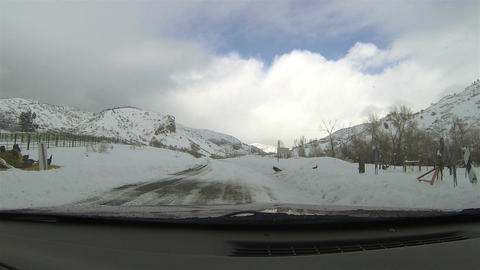 Wild turkey crossing winter snow covered mountain road HD 009 Footage