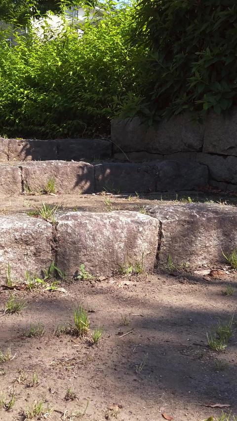 Stone steps_portrait Live Action