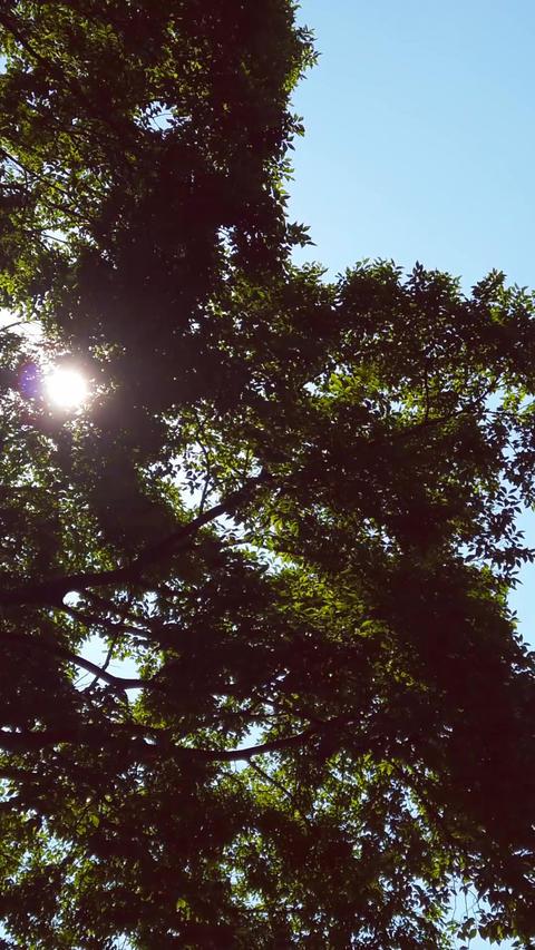 Backlit tree_portrait Live Action