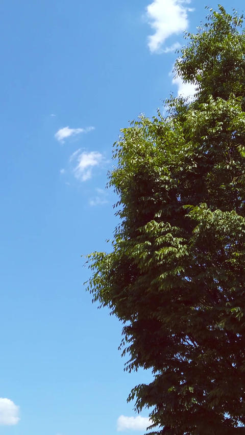 Trees and sky_portrait Live Action