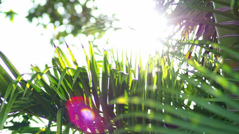 Subtropical swaying palm leaves and sunbeams Live Action