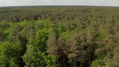 AERIAL: Slow flight forward towards Rich Green Forest Tree Tops over Germany Live Action