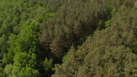 AERIAL: Slow Establishing Shot into Rich Green Forest Tree Tops in Germany Live Action