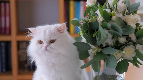 Cat is sniffing and rubbing its nose against the flower bouquet Live Action