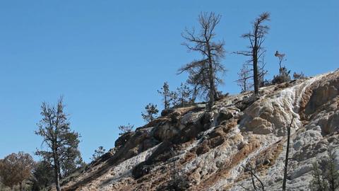 Yellowstone Mammoth Terrace trees P HD GIF