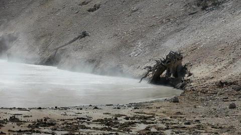 Yellowstone Mud Vulcano dead tree P HD 2335 Live Action