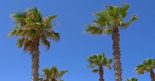 Green Palm Trees On Clear Blue Sky ビデオ