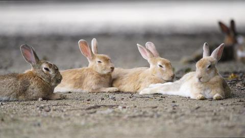 Rabbit 0