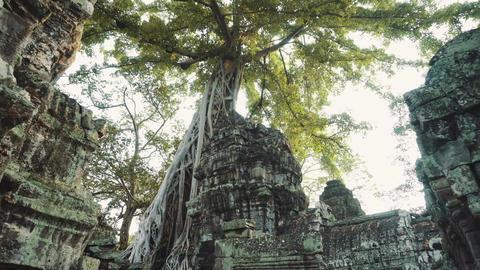 Huge Banyan Tree Ancient Angkor Wat Ruins Panorama Sunrise Asia Live Action