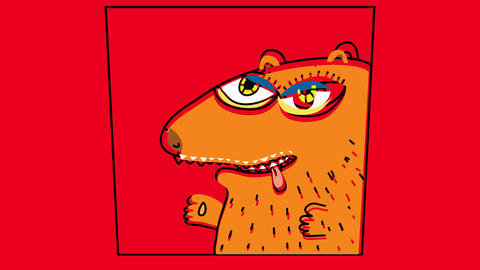 picture of a thirsty groundhog sticking out its tongue with a hairy belly and a fierce stare Animation
