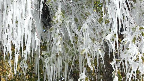 icicles on fruit tree P HD 8020 Footage