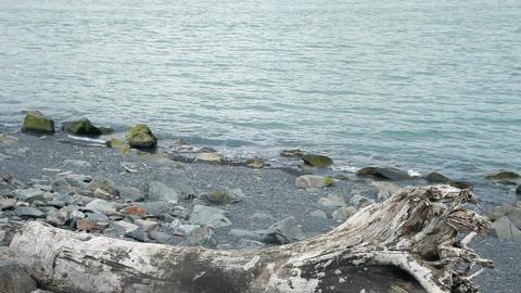 tree trunk on rock shore P HD 8400 Footage