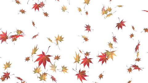 Falling Autumn Leaves with Alpha Channel -Seamless Video Animation