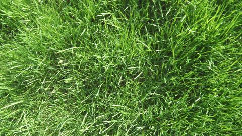 Lawn grass in the back sun ライブ動画