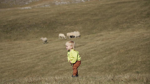 Little blond boy stay the field with sheep ライブ動画