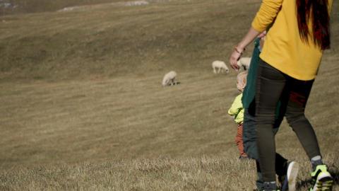 A young family walks on the plains where sheep graze ライブ動画