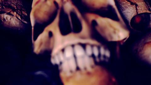 Zoom out of a Human Skull Teeth Live Action