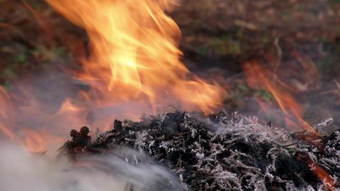 Fire takibi V1-0004 Footage