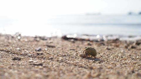 砂浜を歩きボケ背景へと消えていくヤドカリ、フィックス撮影 ライブ動画