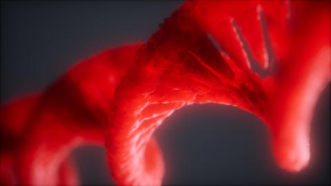 loop double helical structure of dna strand close-up animation Live Action