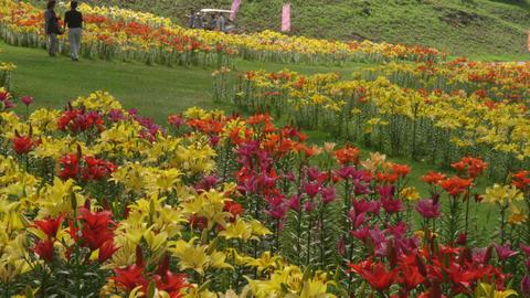 Flowers yuri V1-0005 Footage