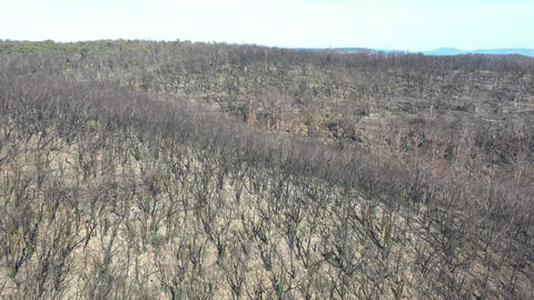 Aerial footage of forest regeneration after the severe bushfires in The Blue Mountains in Australia Live Action
