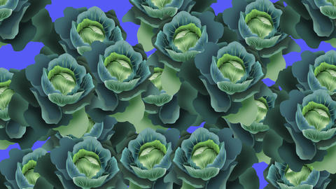 キャベツのトランジション Cabbage all CG動画