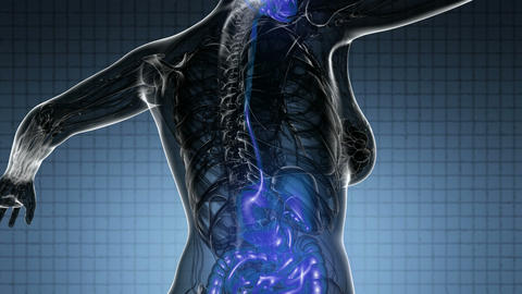 loop science anatomy scan of human digestive system glowing with yellow Animation