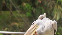 White Heron Clean his Feathers Sitting on Metal Rail Footage