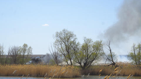 Dry grass or field burns. Smoke from burning dry grass Live Action