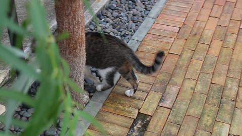 Still life cat chilled in vintage garden Live Action