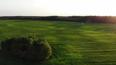 Aerial shot, flight near green trees in the country side green field on the Live Action