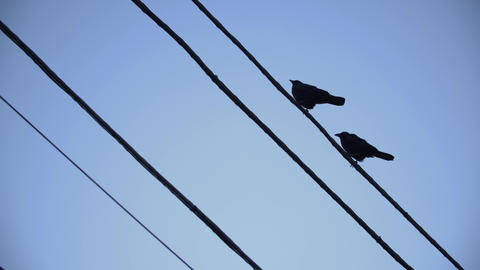 two Crows Fly separately Live Action
