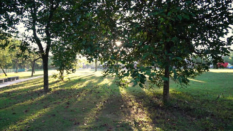 Park with trees and long shadows with sun rays and flares from morning sun Live Action