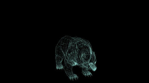 wire frame animation of bear attack on black background Animation