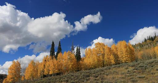 Mountain ridge autumn aspen trees clouds time lapse DCI 4K 686 Footage